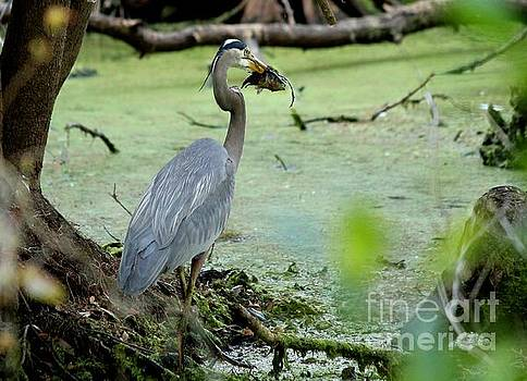 Fishing Heron by Theresa Willingham