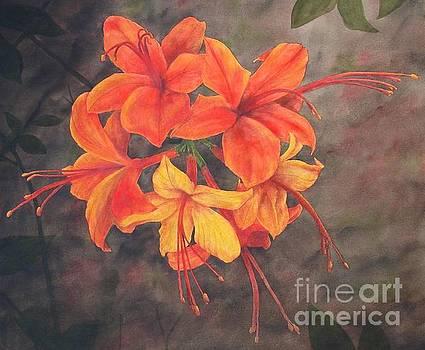 Flaming Azalea by Penny Johnson