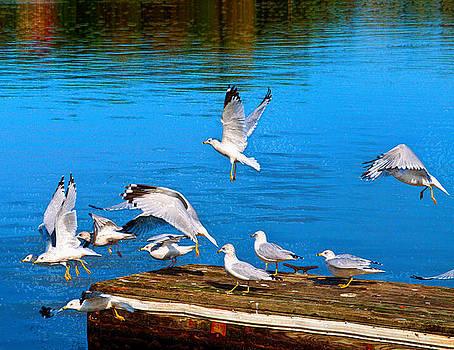 Flight by Anthony Vlach
