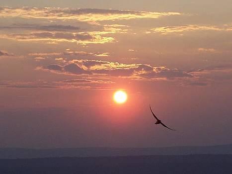 Flight at Sunset by Jennifer Ransom