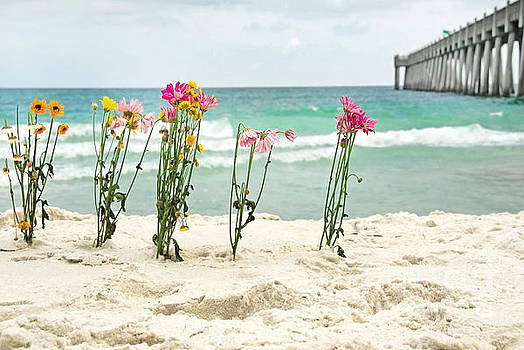 Flowers By Ocean by Cheryl Casey