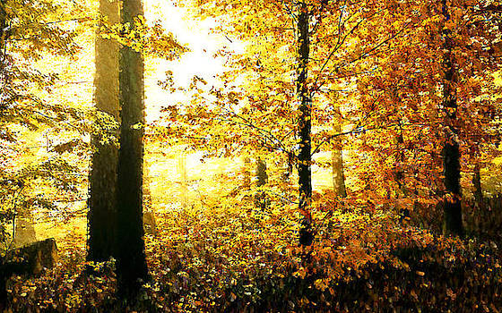 Forest B by Bob Frase