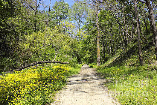 Forest Path with vibrant yellow flowers by Kiril Stanchev