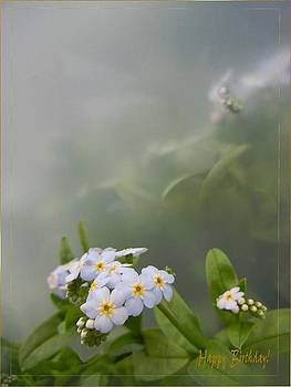 Forget-me-not by Ilona Stefan