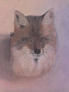 Fox by Stephen Thomson