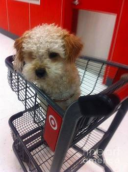 Free ride in Target by Sherri Durrell