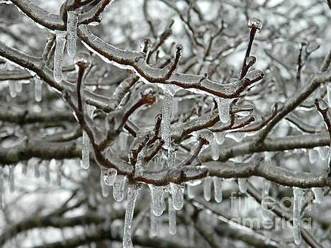 Freezing Rain by Timothy Fleming