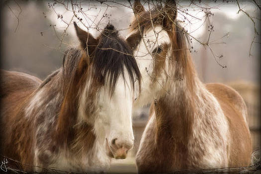 Friends by Hazel Billingsley