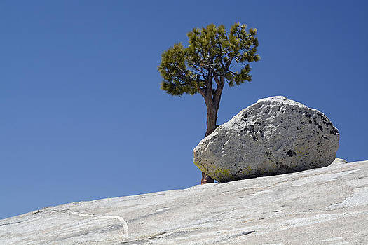 Friends in Yosemite Boulder and Tree by Bruce Gourley