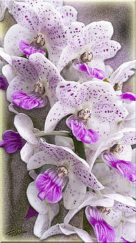 Gentle Persuasion Orchid by Roy Foos
