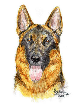 German Shepherd by David Iglesias