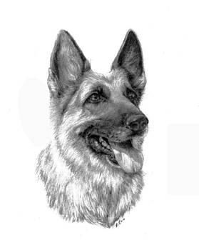 German Shepherd by Lou Ortiz