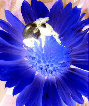 Ghost of a Bee by Mary Ann Southern