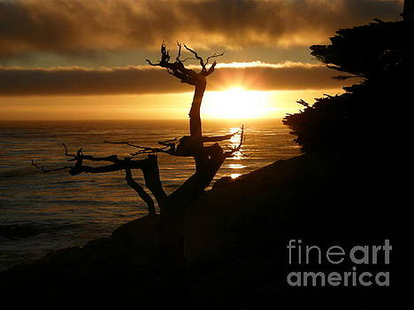 Ghost Tree at Sunset by Bev Conover