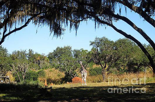 Giraffe among the trees by Nora Martinez