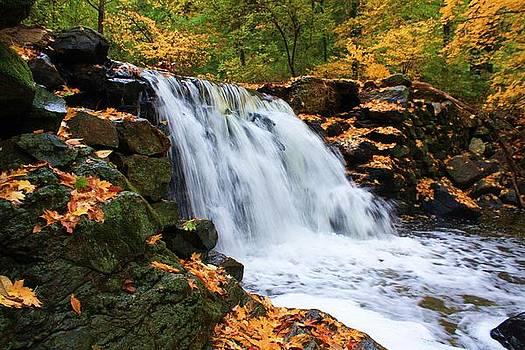 Golden Brook by Daniel Rooney