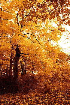 Golden leaves 2 by Jocelyne Choquette