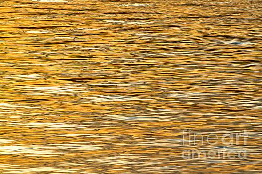 Golden Sunrise Reflections  by Jay Nodianos