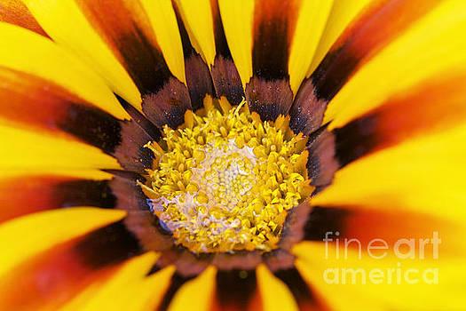 Good Morning Sunshine by Pamela Gail Torres
