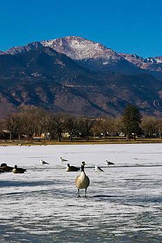 Goose at the Peak by Matt Radcliffe