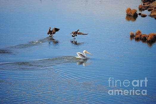 Goose Goose Pelican by J Bern Hunt