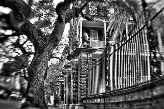 Graceful Old Oak and Fence One by Andrew Crispi