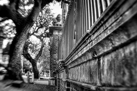 Graceful Old Oak and Fence Two by Andrew Crispi