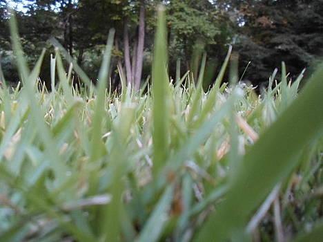 Grass Blades by Jenna Mengersen