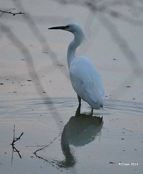 Great Egret at Sunset 1 by Jill Baum