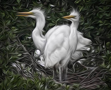 Great Egret Chicks by Hazel Billingsley