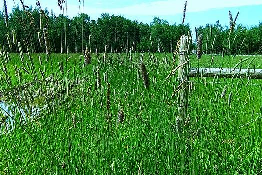 Green Meadow by Rose Szautner