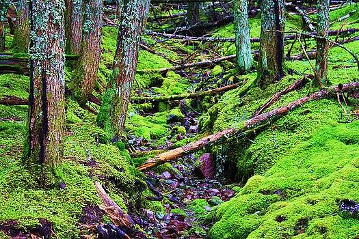 Green Woods by Daniel Rooney