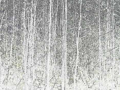 Grey Forest by Andrew Morse