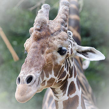 Happy Giraffe by Renee Barnes