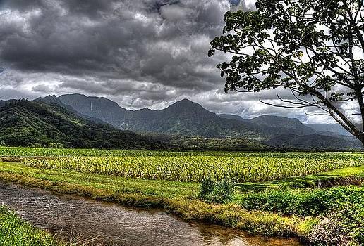 Hawaiian Storm by Michael Misciagno