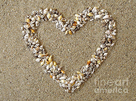 Heart from Shells Decoration by Kiril Stanchev
