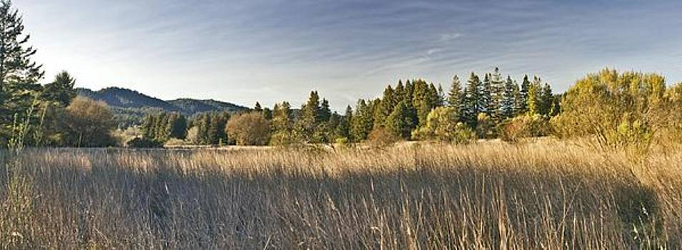 Henry Cowell Meadow Sunset Panorama by Larry Darnell