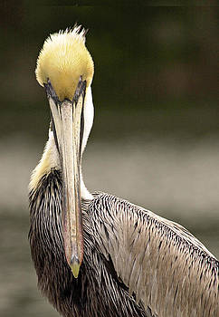 Here's looking at you by Bill LITTELL