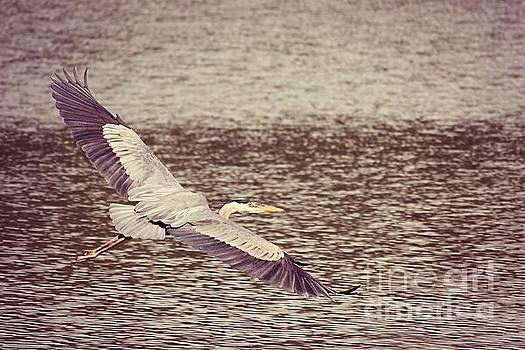 Heron in Flight  by Lauren Maki