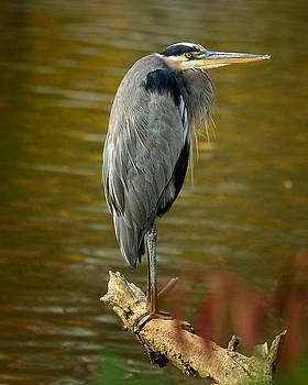 Heron on Lake Logan by Dick Wood