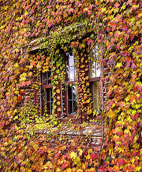 Hidden in the Maylake Ivy by Ed Cilley