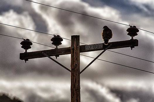 High Voltage by Arlene Carley