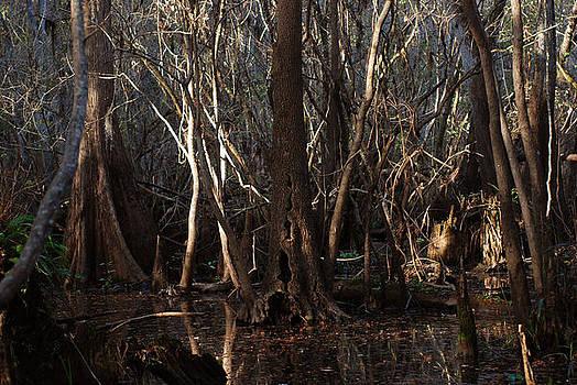 Hillsborough Swamp Autumn 01 by Carol Kay