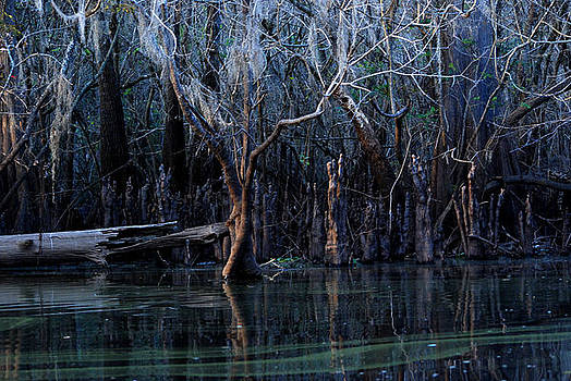Hillsborough Swamp Autumn 18 by Carol Kay