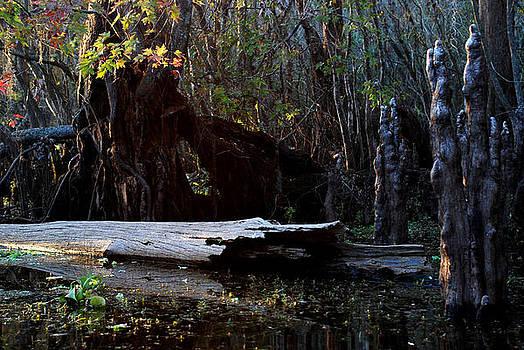 Hillsborough Swamp Autumn 29 by Carol Kay