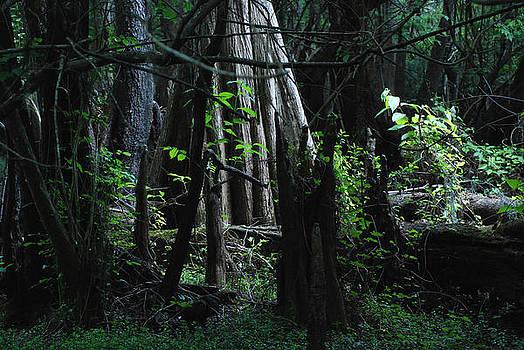 Hillsborough Swamp Spring 02 by Carol Kay