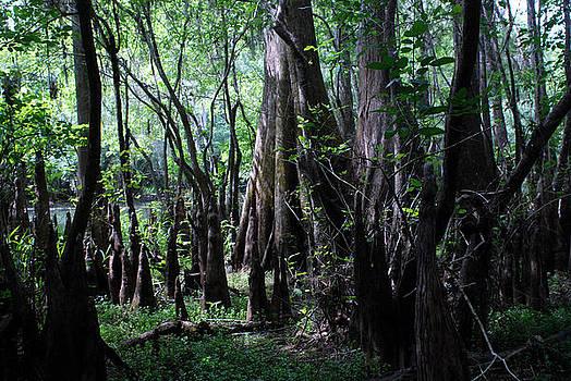 Hillsborough Swamp Spring 03 by Carol Kay
