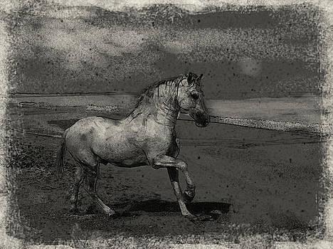 Horse by Mehrdad Sedghi
