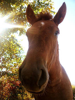 Horse nose by Cora Brum