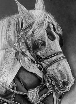Horse by Tara Aguilar